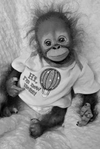 New born moody monkey